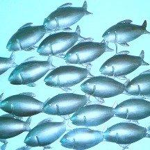 Restaurants de poisson lyon
